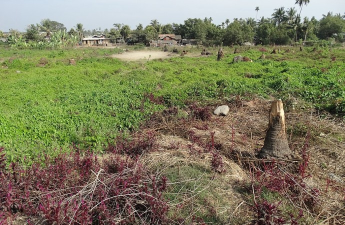 Decisive Action is Overdue to Protect the Rohingyas